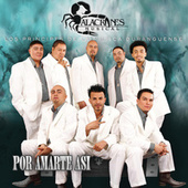 Play & Download Por Amarte Así by Alacranes Musical | Napster