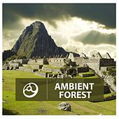 Play & Download Ambient Forest by Various Artists | Napster