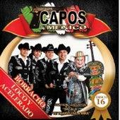 Borracho Loco y Acelerado by Los Capos De Mexico