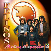 Play & Download Muñeca De Aparador by Felinos | Napster