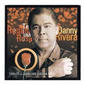 Play & Download Te Regalo Una Rosa by Danny Rivera | Napster