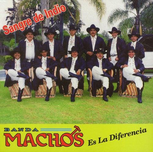 Play & Download Sangre De Indio by Banda Machos | Napster
