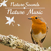 Play & Download Nature Music & Nature Sounds - Relaxing Sounds of Nature Songs for Relaxation & Soothing Atmosphere by Rainforest Music Lullabies Ensemble | Napster