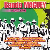 Play & Download Las Clasicas Banda Maguey by Banda Maguey | Napster