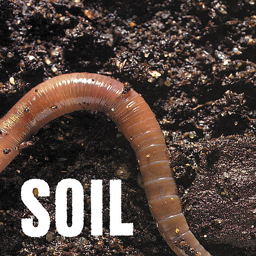 Play & Download SOiL EP by Soil | Napster