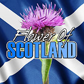 Play & Download Flower of Scotland by Various Artists | Napster