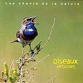 Play & Download Oiseaux Virtuoses by Various Artists | Napster