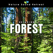 Play & Download Relaxing Forest Meditation with Birds and Wind by Nature Sound Retreat | Napster