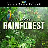 Play & Download Relaxing Rainforest for Meditation & Relaxation by Nature Sound Retreat | Napster