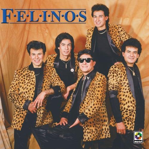 Felinos by Felinos