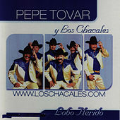 Play & Download Lobo Herido by Los Chacales de Pepe Tovar | Napster