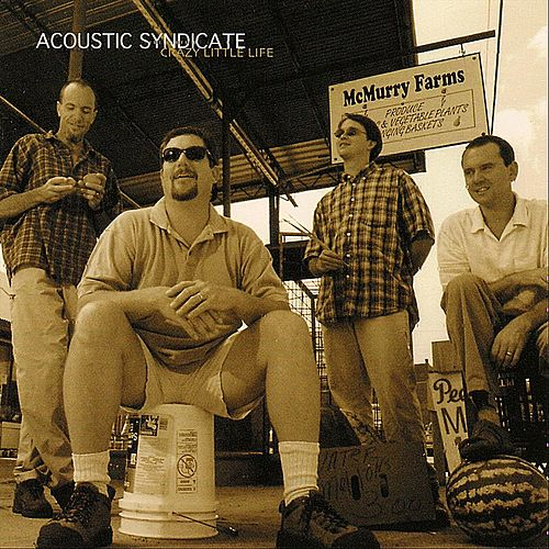 Play & Download Crazy Little Life by Acoustic Syndicate | Napster