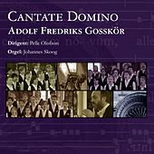 Cantate Domino by Various Artists