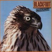 Play & Download Marauder by Blackfoot | Napster