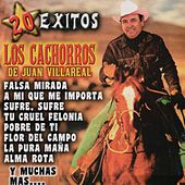 Play & Download 20 Exitos by Los Cachorros de Juan Villarreal | Napster