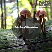 Play & Download Gold Gaia VA Compilation by Various Artists | Napster