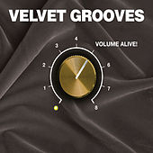 Play & Download Velvet Grooves Volume Alive! by Various Artists | Napster