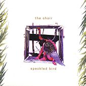 Speckled Bird by The Choir (3)