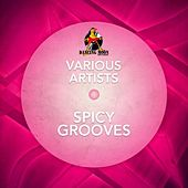 Play & Download Spicy Grooves by Various Artists | Napster
