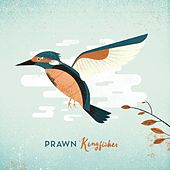 Kingfisher Deluxe by Prawn