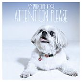 Smallroom 009 Attention Please von Various Artists