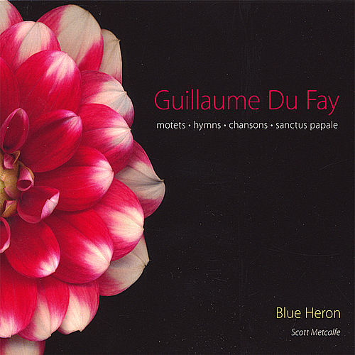 Play & Download Guillaume Du Fay: Motets, Hymns & Chansons by Blue Heron | Napster
