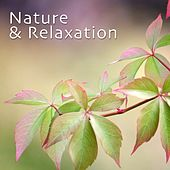 Nature & Relaxation by Various Artists