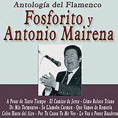 Play & Download Antología del Flamenco: Fosforito y Antonio Mairena by Various Artists | Napster