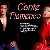 Play & Download Cante Flamenco by Various Artists | Napster