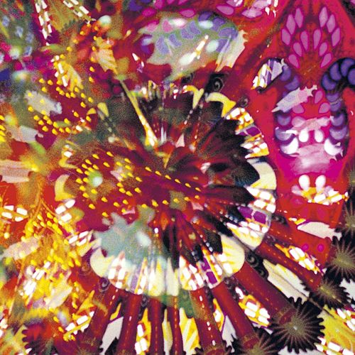 Play & Download CVE Live 2011 by Caribou Vibration Ensemble | Napster