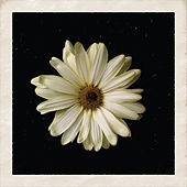 Play & Download Flower by Cody Simpson | Napster