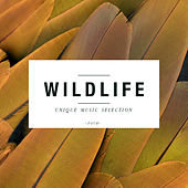 Play & Download Wildlife, Vol. 4 by Various Artists | Napster