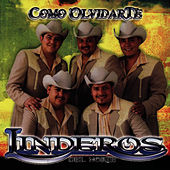 Play & Download Como Olvidarte by Linderos del Norte | Napster