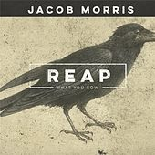 Play & Download Reap What You Sow by Jacob Morris | Napster
