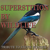 Superstition by Wildlife