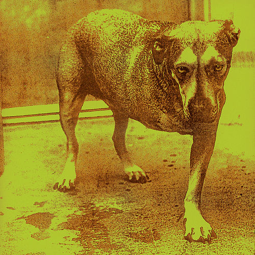 Play & Download Alice In Chains by Alice in Chains | Napster