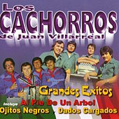Play & Download Grandes Exitos by Los Cachorros De Juan Villarreal | Napster