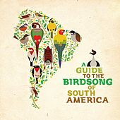 A Guide to the Birdsong of South America by Various Artists