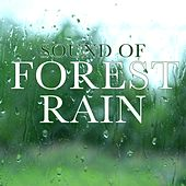Sound of Forest Rain by Various Artists