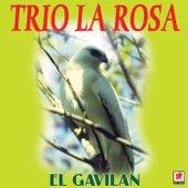 El Gavilan by Trío La Rosa