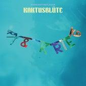 Play & Download Kaktusblüte by Vierkanttretlager | Napster