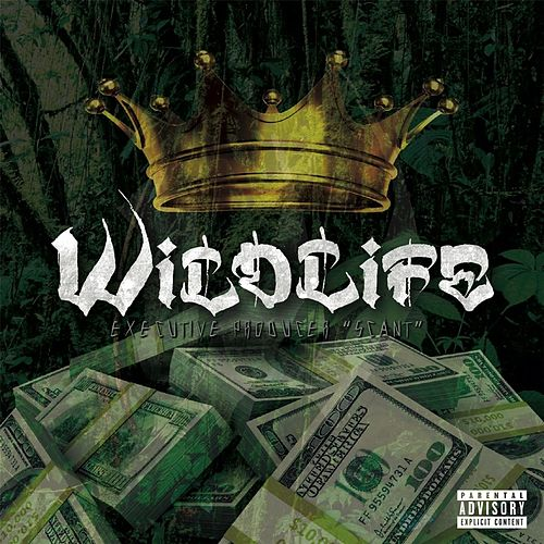 Play & Download Wildlife by Wildlife | Napster