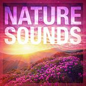 Nature Sounds, Vol. 1 by Nature Sounds Nature Music