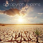 Agropyron Repens by Koan