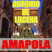Play & Download Amapola by Antonio De Lucena | Napster
