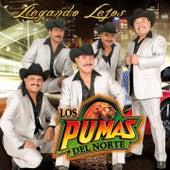 Play & Download Llegando Lejos by Los Pumas Del Norte | Napster