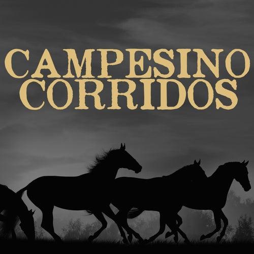 Campesino Corridos by Various Artists