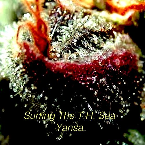 Play & Download Surfing the T.H. Sea by Yansa | Napster
