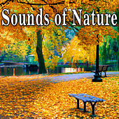 Play & Download Sounds of Nature by Nature Soundscape | Napster