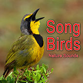 Play & Download Song Birds (Nature Sounds) by Nature Soundscape | Napster